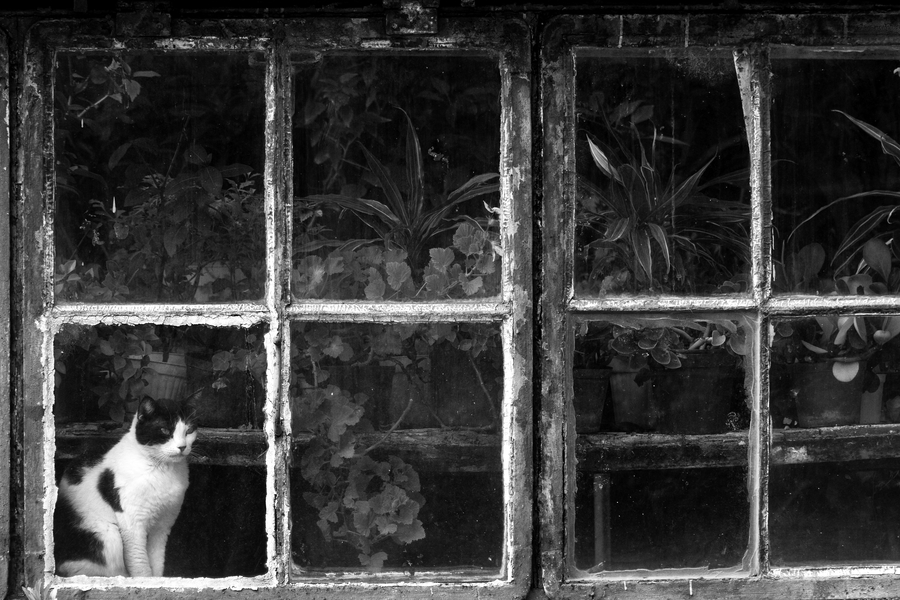 Black & White Cat at Botanical Garden