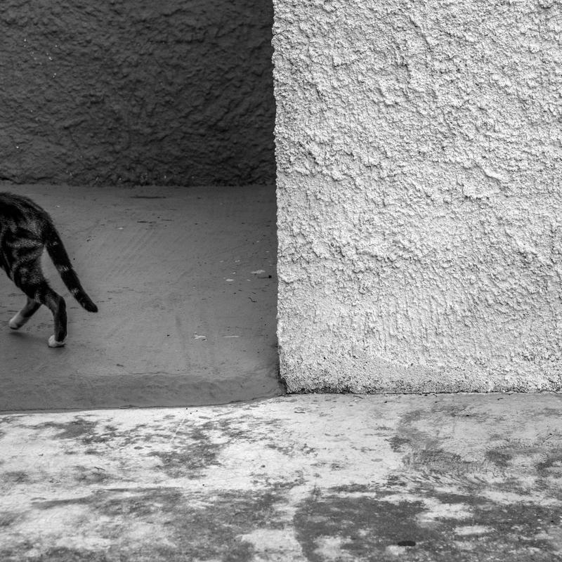 Rectangle Cat