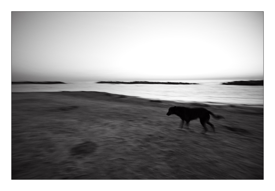 Running Dog at Sunrise